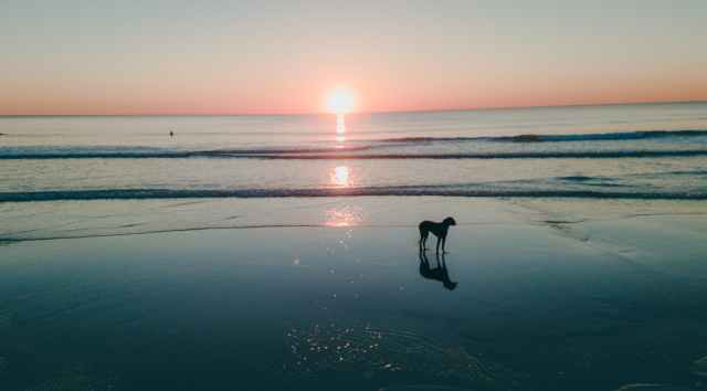 dog on seashore